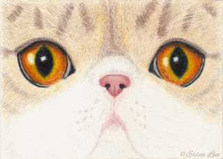 Persian Cat Eyes Drawing Prismacolor Colored Pencils