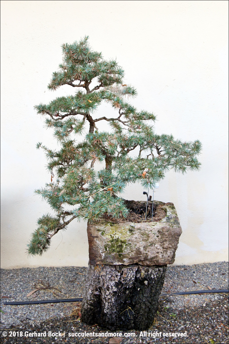 Barrie Coates Tranquil Green Valley Garden Complete With Bonsai