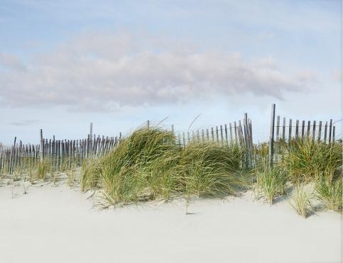 Beach Dune Fence Green Grass Photo Print