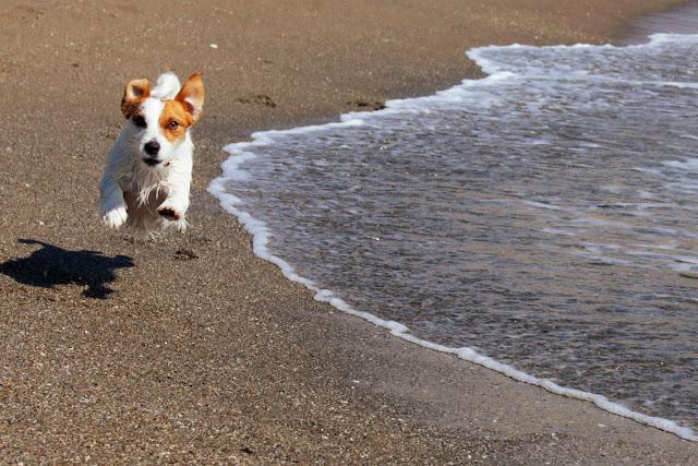Amy corriendo en la playa de Fuengirola