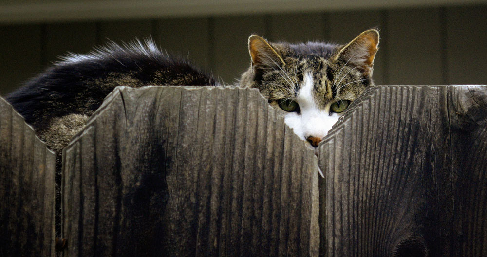 Aidan takaa vakoileva kissa.