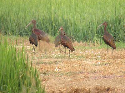 california birding hotspots