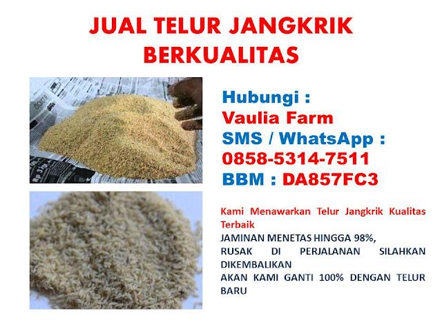 Jual Telur Jangkrik  Maluku Tengah