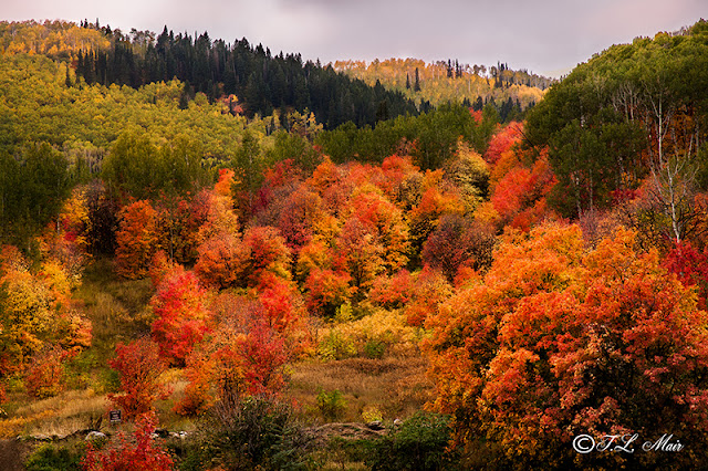 Autumn colors blanket Snake Creek canyon in Northern Utah, Part of the Wasatch Mountains.