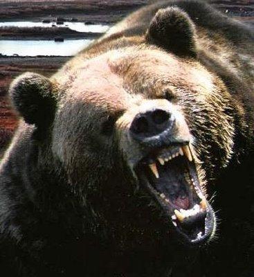 5Five5Things: On Comedians, Bears and Twerking