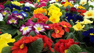 flores, alergia, naturopatia