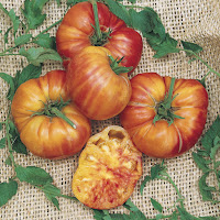 Marui Atsparūs Pomidorai Flora Love Zone