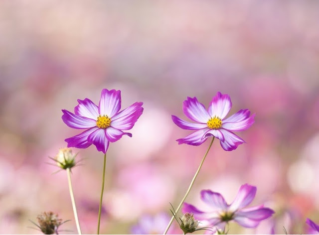 HD-summer-flower-Wallpaper