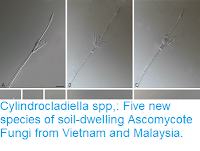 https://sciencythoughts.blogspot.com/2018/05/cylindrocladiella-spp-five-new-species.html