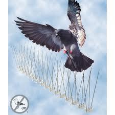 تركيب طارد طيور بالمدينة المنورة