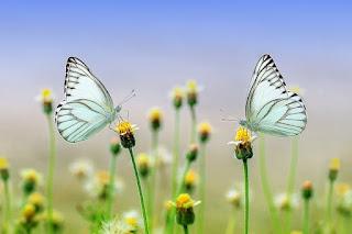 Frases sobre borboletas