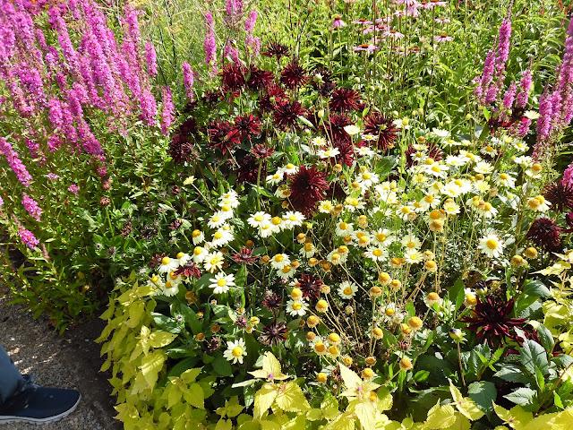 kolorowa rabata, ogród angielski