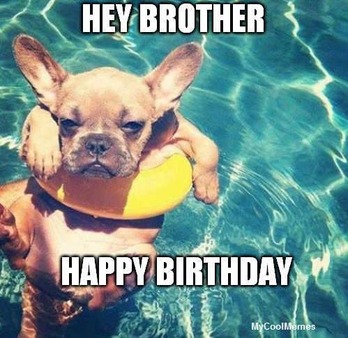 Funny Happy Birthday Dog Meme - MyCoolMemes