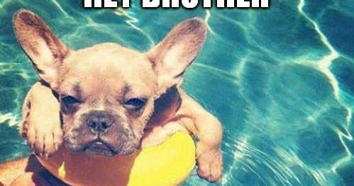 funny happy birthday dog meme hey awesome friends are you looking