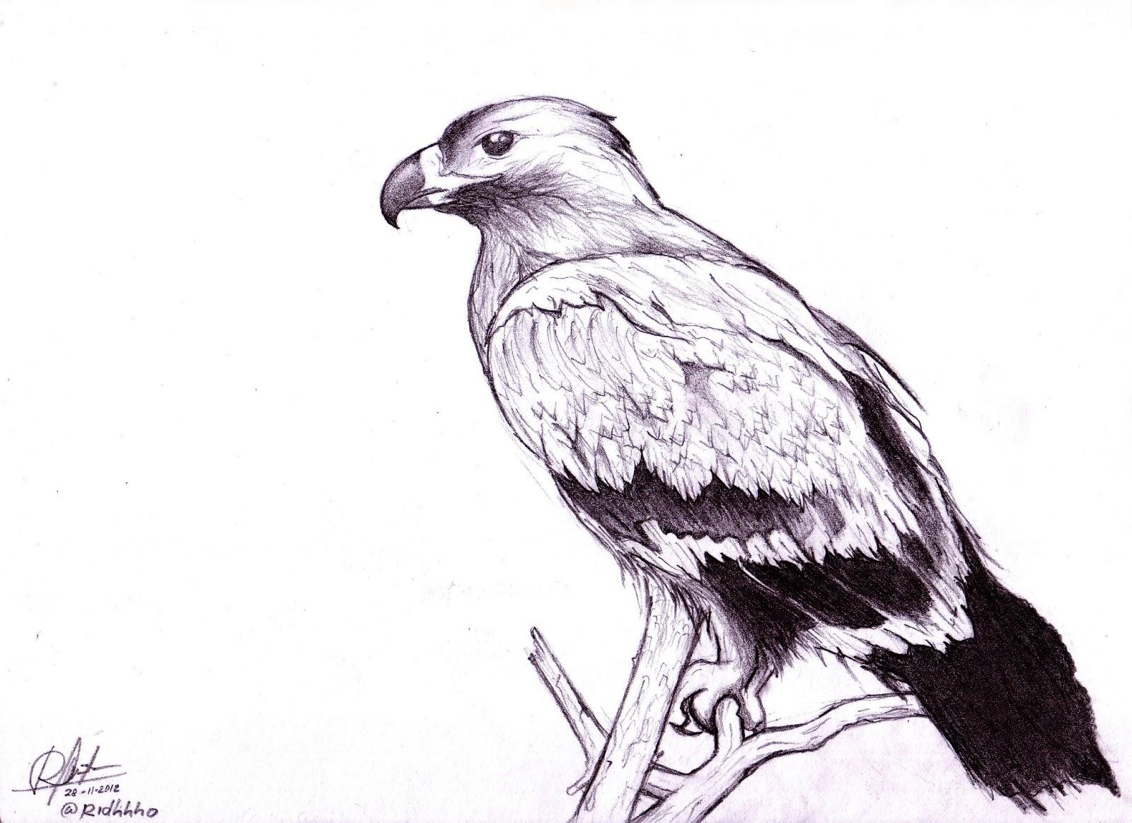 Gambar  Ridho Art Belajar Menggambar Gambar  Burung  Kuda