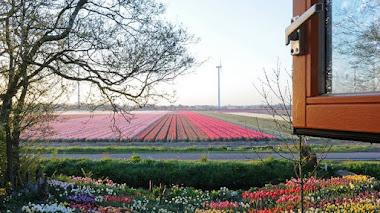 Una habitación con vistas a campos de bulbos en flor
