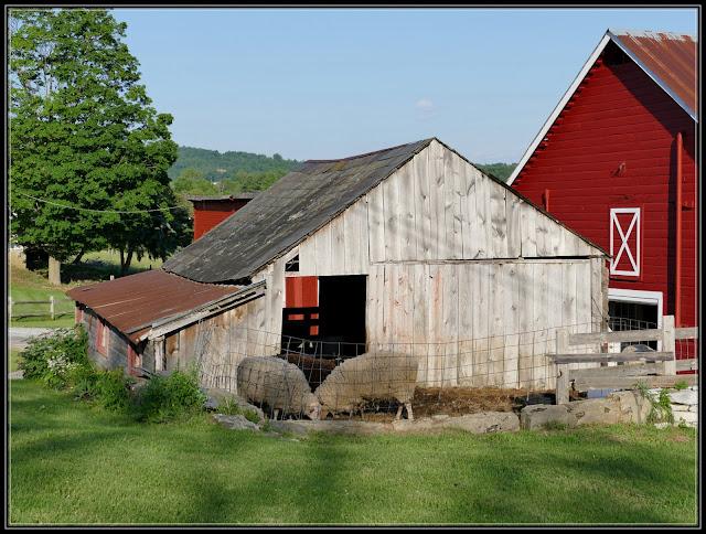 Granville NY, Dancing Ewe Farm