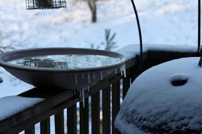 icicles on birdbath's rim