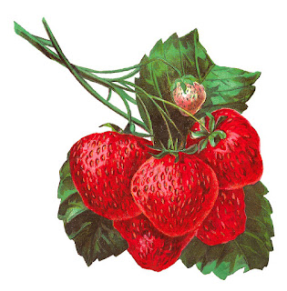 strawberry fruit clip art image artwork botanical download