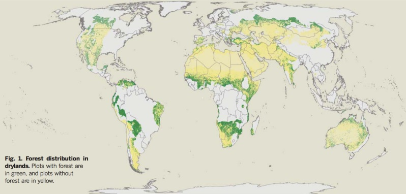 Mapa: A distribuição das florestas nas terras áridas
