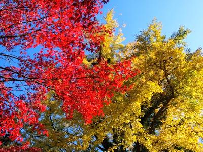長勝寺の紅葉