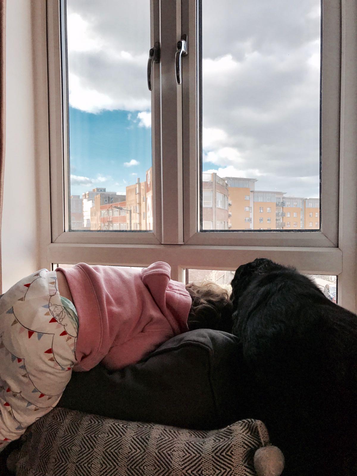 chien et bébé à la maison organisation, éducation d'un chien et d'un bébé à la maison