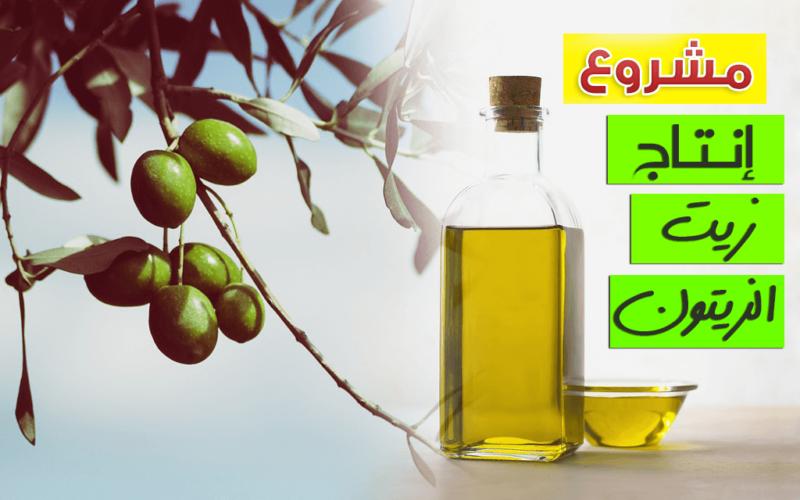 دراسه جدوي فكرة مشروع مصنع إنتاج زيت الزيتون في مصر 2019