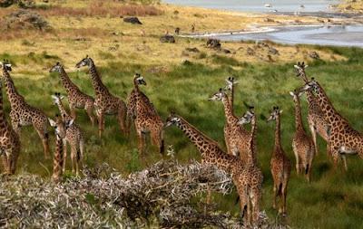 Tanzania Honeymoon Safari packages