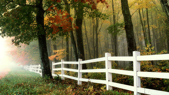 Fences structures and landscape features can protect trees from soil compaction and other dangers
