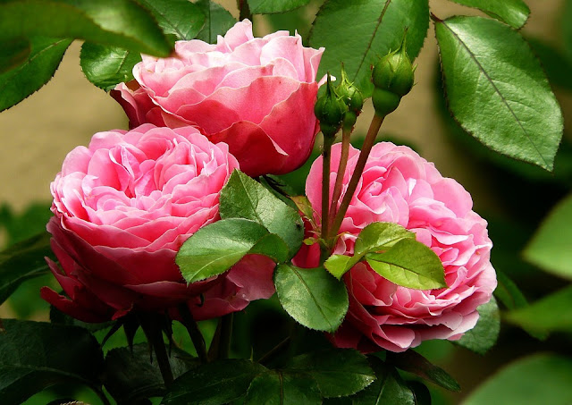 ABC Liste Blumen, A-Z Blumen, Aktivierungsideen, Seniorenarbeit, Demenz
