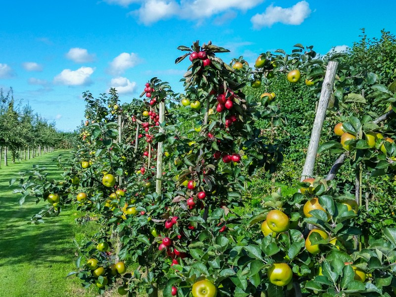 Download Apple Garden Behang HD wallpaper. Click Visit page Button for More Images.