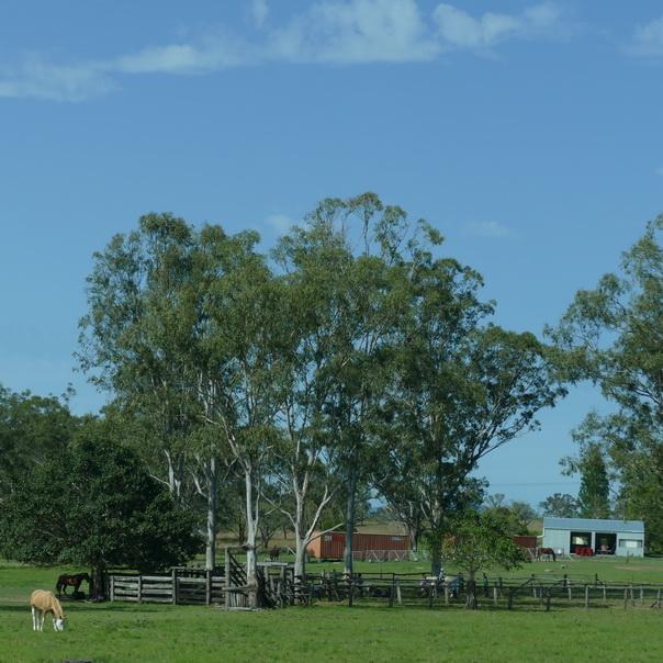 Grün ländlich ostküste Australien Farm
