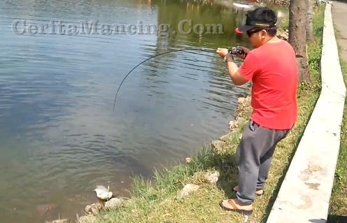 Casting Ikan Bawal Besar Di Kolam Pemancingan Catch And Release