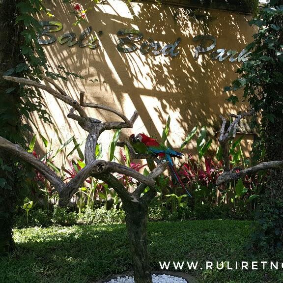 Jumpai 1000 Burung dalam satu area terbaik di Bali Bird Park