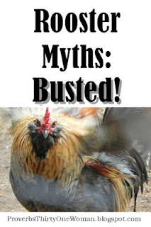 https://proverbsthirtyonewoman.blogspot.com/2017/11/8-rooster-myths-busted.html