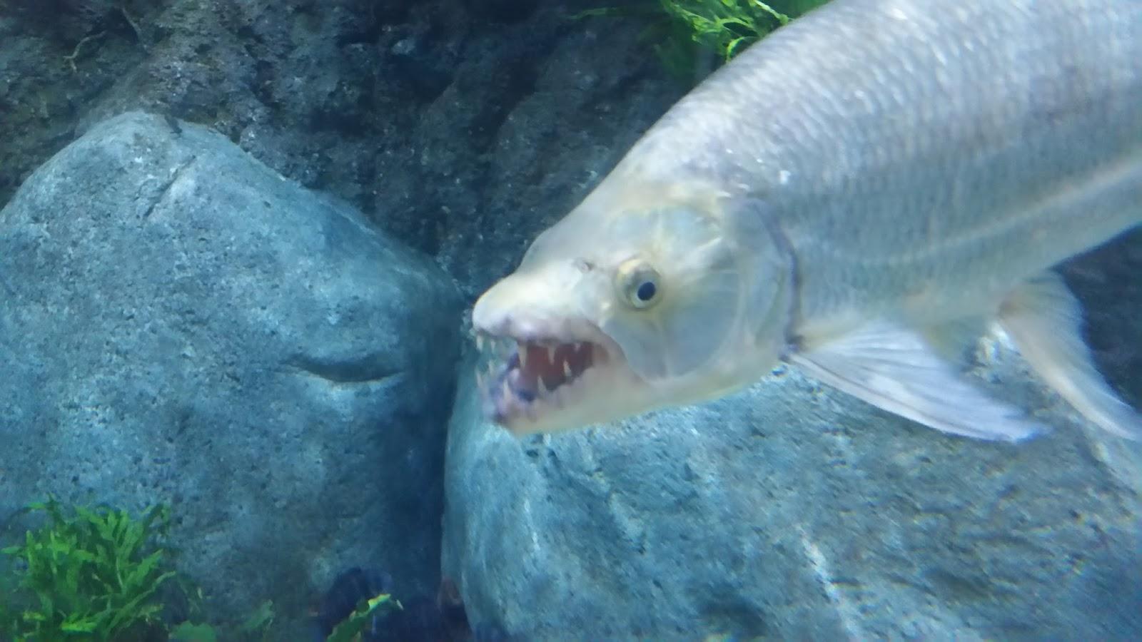 mooie aquariums tropisch