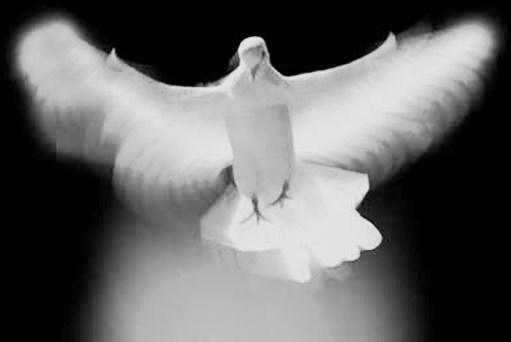 A Paz Que Trago Em Meu Peito é Diferente Da Paz Que Eu: Blog Da Andréa Medas: A Paz Que Trago Em Meu Peito