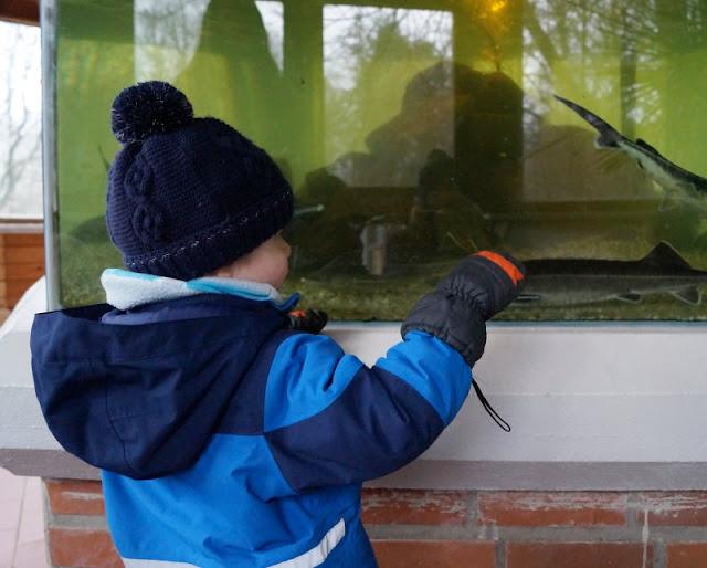 Tierpark Neumünster Kinder Familie Herbst Winter Frühjahr Fütterung Aquarium