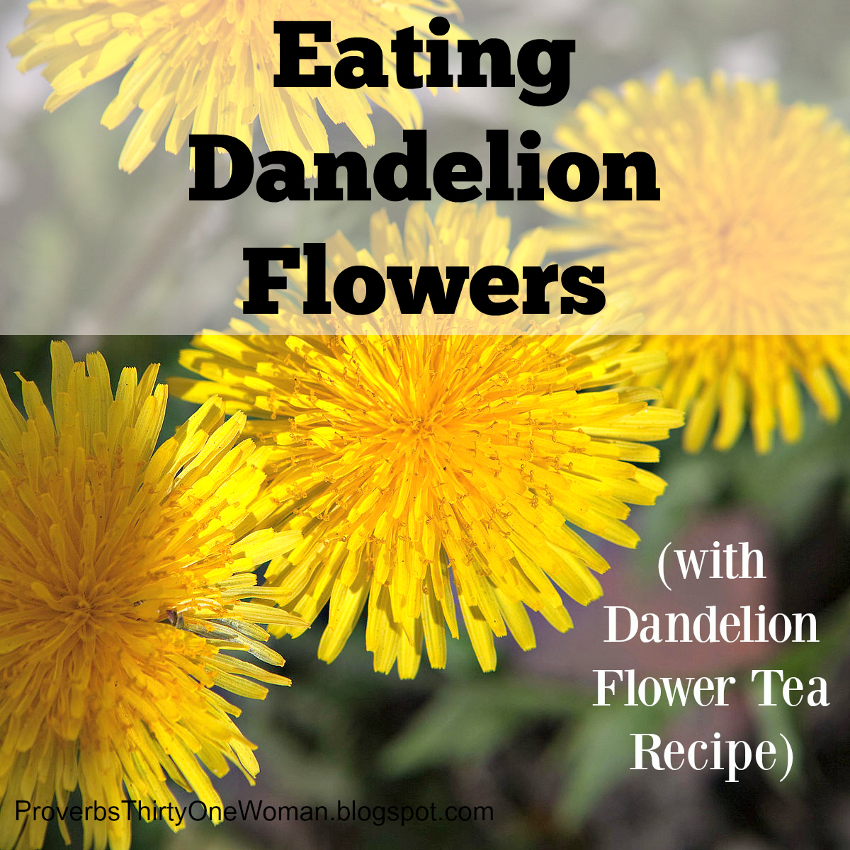proverbs 31 woman: eating dandelion flowers (dandelion flower tea