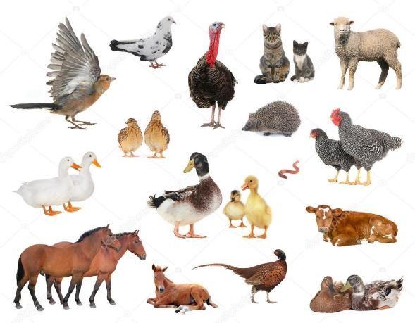 Imágenes de Animales Domésticos