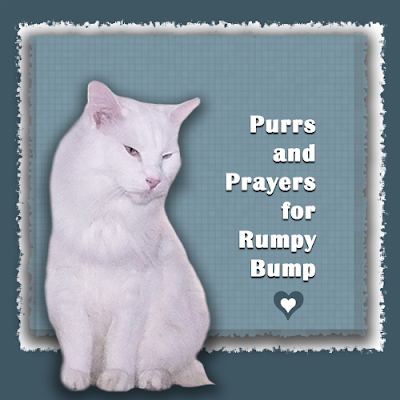 Purrs and prayers for Rumpy Bump