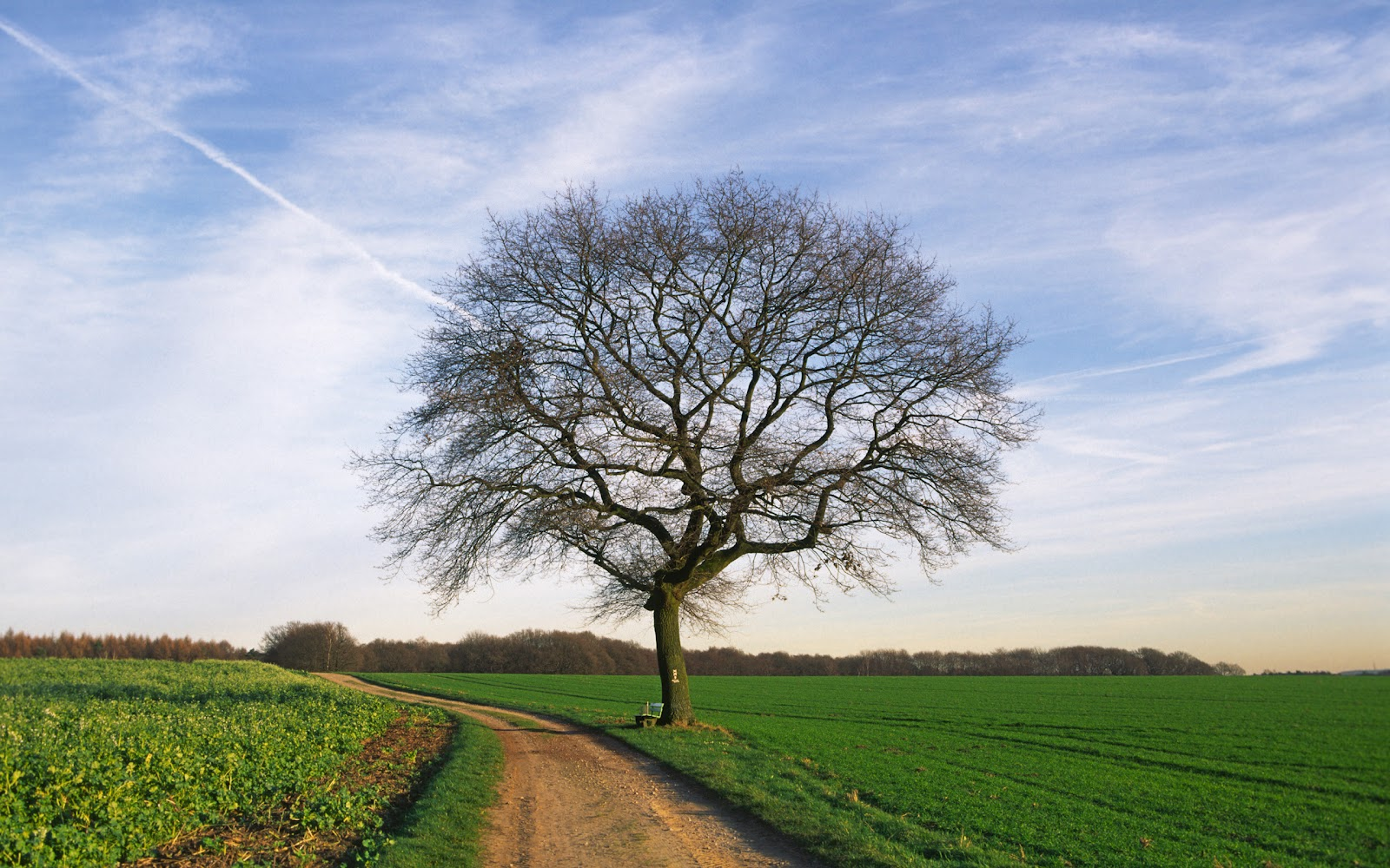 WnP: Wallpapers & Pictures: Widescreen Beautiful Trees ...