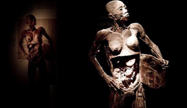 """Exposição """"Fantástico Corpo Humano"""" propõe viagem pela anatomia humana"""