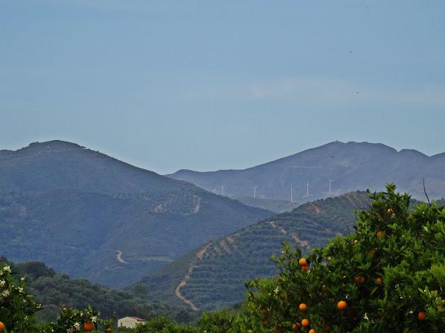pomarańcze w Grecji