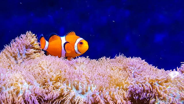 Finding Nemo Sea LIfe