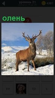 На снежной поверхности холма стоит гордый олень, высоко подняв свою голову