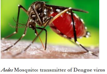 โรคไข้เลือดออก(Dengue Fever) มีวิธีป้องกันอย่างไร แปลบทความ เรียนภาษาอังกฤษ Learn English writing and speaking, แปล ภาษาไทยเป็นภาษาอังกฤษ, แปลภาษาอังกฤษเป็นไทย