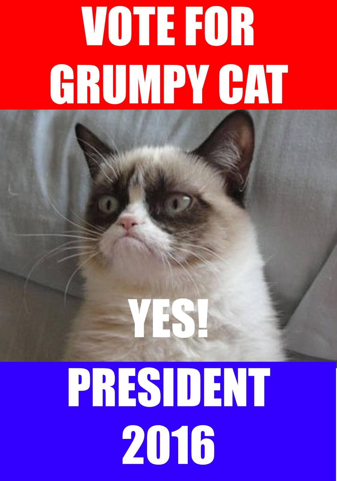 yes cat memes - photo #29