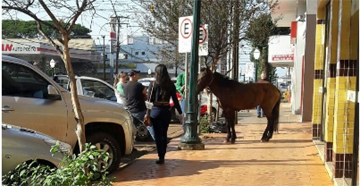 Campo Mourão: Olha o cavalo na calçada!