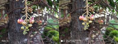 Xiaomi Redmi Y2 vs Xiaomi Redmi Note 5 Pro Camera Comparison